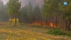 Portekiz'de Orman Yangınları