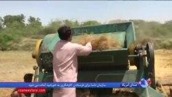 تولید سوخت اتانول از کاه توسط منهدس پاکستانی