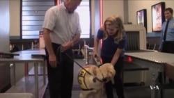 Huấn luyện chó đi du hành bằng máy bay