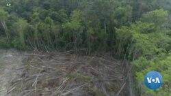 Local Cambodian Patrols Seek to End Illegal Logging