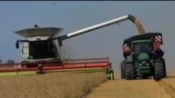 报告:只要减少粮食浪费就能养活全球人口