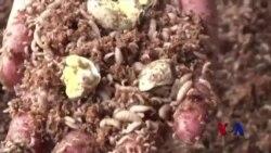 四川养殖场回收剩饭 变废为宝
