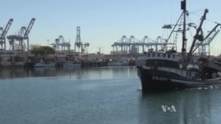 Southern California Fisheries Hit Hard By Unusual Water Temperatures