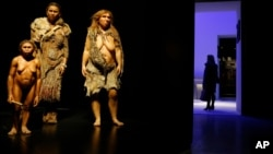 FILE - From left, models representing Flores, Homo sapiens and Neanderthal women stand in the Musee des Confluences, a science and anthropology museum in Lyon, central France, Dec. 18, 2014.