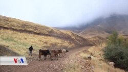 Bedewîya Payîzê li Gundê Şuşaniş ya Wanê