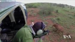 High-tech Collars Help Save African Elephants