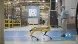 Ford взяла на роботу Boston Dynamics роботів. Відео