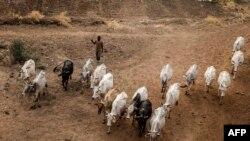 35 morts dans des affrontements entre éleveurs et agriculteurs tchadiens