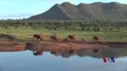 科研人员帮助大象离开肯尼亚农田