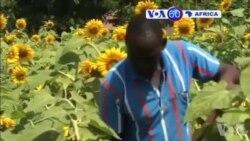 Manchetes Africanas 20 Agosto 2015
