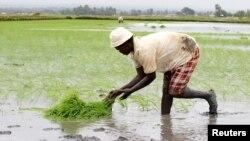 Food Security for Kenya