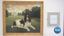 Dog Museum Pays Tribute to Man's Best Friend