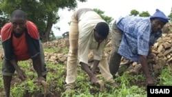 Farmers in Ghana.