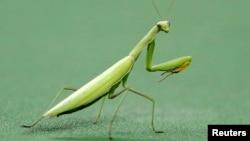 Los científicos centraron su trabajo en animales invertebrados, los artrópodos, incluidos insectos, crustáceos y arácnidos.