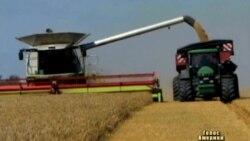 У світі марнують половину вироблених харчів