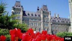Công chúa Juliana gởi tặng Canada 100,000 cây hoa Tulip, mà chẳng biết ai dịch sang tiếng Việt với cái tên rất đẹp, Uất Kim Hương. (Hình: Đinh Yên Thảo)