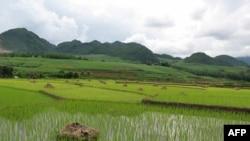 Đặng Phú Phong và nỗi buồn lưu lạc