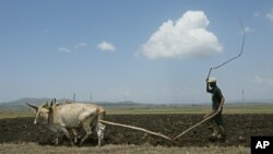 FILE - A farmer plows his land on the outskirts of the Ethiopian capital, Addis Ababa, May 10, 2005.
