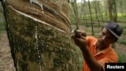 Seorang petani menyadap pohon karet di perkebunan karet di Deli Serdang, Sumatra Utara, 6 Februari 2010. (Foto: Reuters)