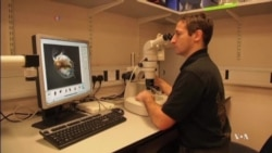 Tiny Crustaceans Prepare for Big Mission in Space