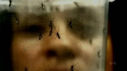 Florida Fights Zika by Killing Mosquitoes