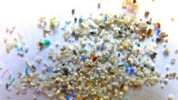 Quiz Draft - Biodegradable Microbeads Could Help Earth's Oceans