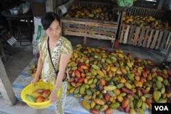 Một người nông dân trồng hạt cacao, bên cạnh là thành phẩm mà cô thu hoạch được (ảnh: V. Marou)