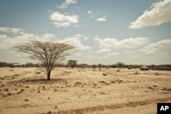 Kenya's Turkana region shows effects of severe drought affecting Horn of Africa,