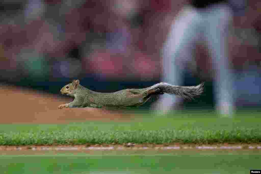 A squirrel runs across the field in the fifth inning in a game between the Minnesota Twins and Chicago White Sox at Target Field in Minneapolis, Minnesota, Aug. 20, 2019. (Mandatory Credit: Brad Rempel/USA TODAY Sports )