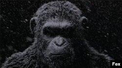 جنگ سیاره میمونها - ۲۰۱۷