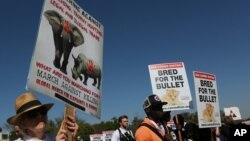 在联合国在南非约翰尼斯堡主持召开的国际野生动植物保护大会会场外面,动物保护人士游行(2016年9月24日)