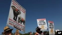 Manifestation d'activistes, site de la Convention sur le commerce international des espèces de faune et de flore sauvages menacées d'extinction, CITES, Johannesburg, Afrique du sud, le 24 septembre 2016.