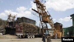 萨尔瓦多向中国出口的甘蔗 (资料照片)