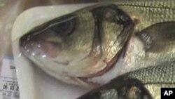 Namibe: Mais de 100 toneladas de pescado morto na costa