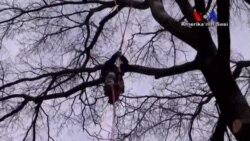 Ağaç Tırmanma Yarışmasına Büyük İlgi