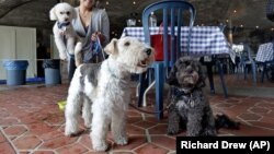 Michelle Vargas, with, from left, 8-year-old Bichon Frise-Poodle mix named Carmine, 11-year-old Wire Haired Terrier named Lucy, and 10-year-old Shih Tzu-Poodle mix, Luigi, visit a cafe in a Manhattan park, on New York's Upper West Side.