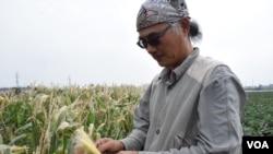 台灣雲林水賊林友善土地組合創辦人蔡得黃。(美國之音湯惠芸)