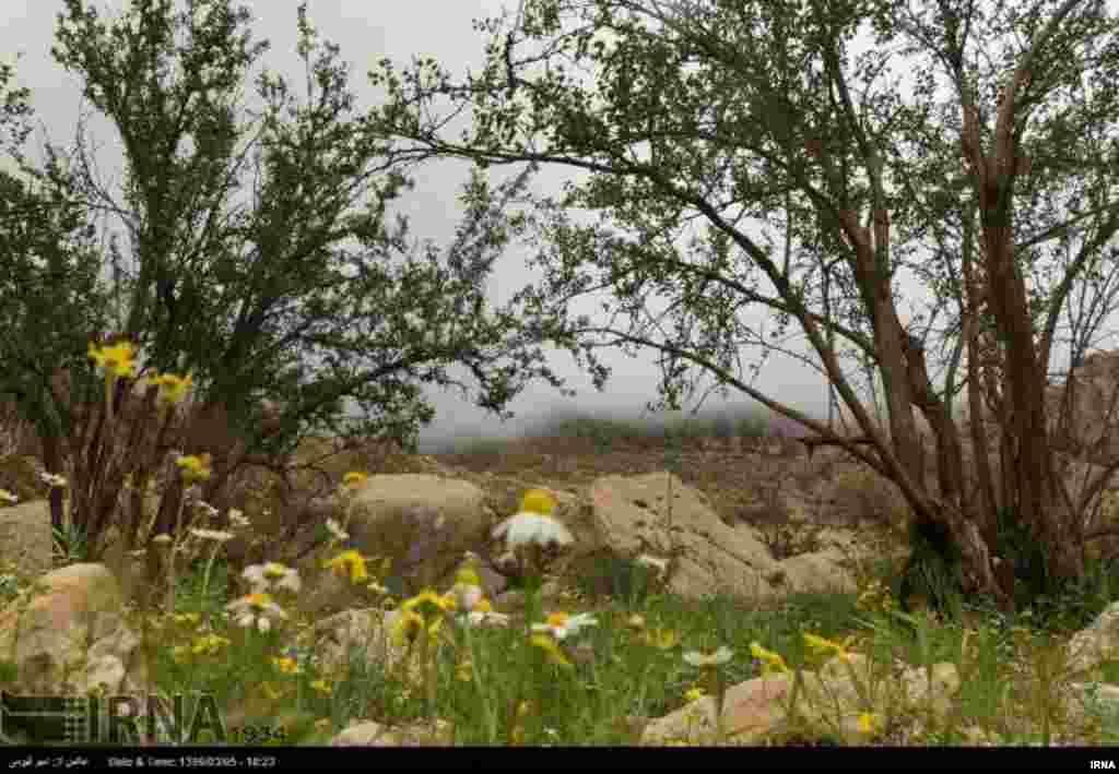 فصل بهار در شهرستان لارستان در جنوب استان فارس عکس: امیر قیومی