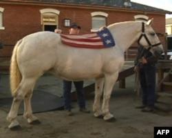 美国陆军老卫队葬礼排的骏马