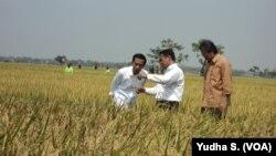Presiden Joko Widodo dan Menteri Pertanian Amran Sulaiman meninjau panen raya di Sukoharjo, 3 Oktober 2015 (Foto: VOA/Yudha)