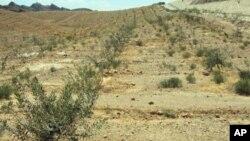 بلوچستان میں زیتون کی کاشت کے فروغ کا منصوبہ