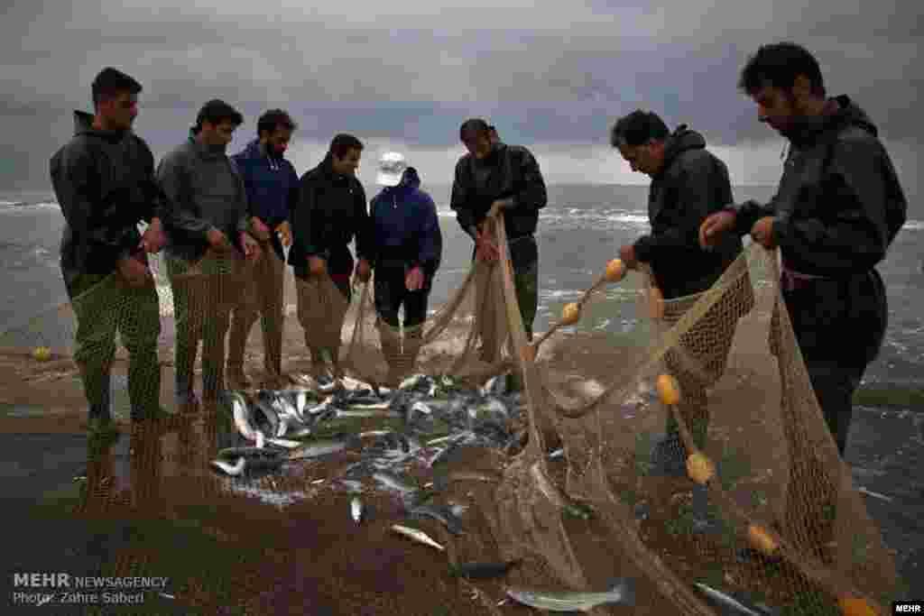 خبر دارید چند روزی است که فصل صید ماهی در شمال ایران آغاز شده است؟ خوردن ماهی تازه فراموش نشود! این عکس از صید ماهی در مازندران است. عکس: زهره صابری، مهر