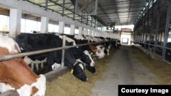 """""""Farma Spreča"""" je jedna od firmi u vlasništvu Nedima Čauševića. Farmi je od 2010. do 2016. godine odobreno više od devet miliona KM poticaja po raznim osnovama. (Foto: CIN)"""