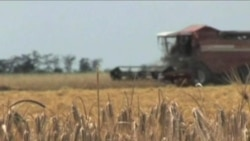 European Farmers Working to Boost Global Grain Supplies