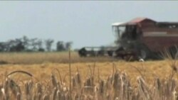 European Farmers Working to Boost Global Grain Supplies