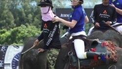 泰国大象马球赛为大象保护募捐
