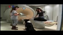 Studi: Anjing Mengerti Perasaan Manusia