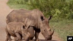 Caçadores furtivos abatem 200 rinocerontes em Moçambique