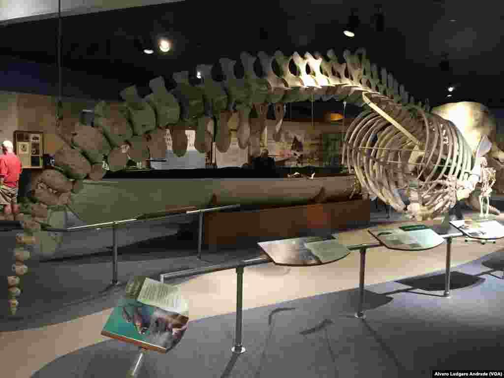Museu da Baleia, New Bedford, Estados Unidos