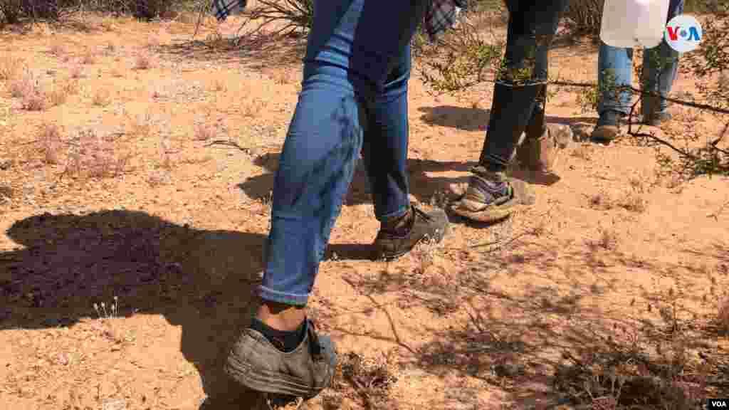 La Voz de América acompañó a agentes de la CBP en un simulacro de cómo migrantes cruzan la frontera con traficantes de personas. La idea es mostrar las condiciones que enfrentan estas personas al realizar este viaje. Photo: Celia Mendoza - VOA